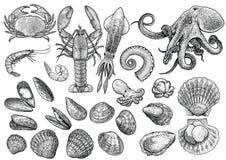 Skaldjur räka, räka, krabba, hummer, tioarmad bläckfisk, bläckfisk, musslor, kammussla, mussla, ostron, illustration för bubblask royaltyfri illustrationer