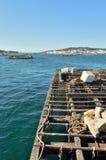 Skaldjurplockning i byn av nolla-dungen Royaltyfri Fotografi