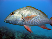 Skalen der silbernen Fische Lizenzfreie Stockfotografie