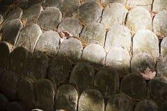 Skalen graviert auf Stein lizenzfreies stockfoto