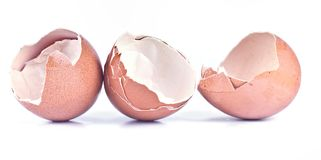 Skalet av fega ägg Royaltyfria Bilder