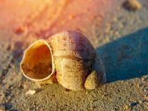 Skalet ligger på sanden på stranden Arkivbild