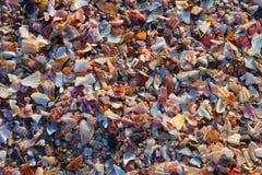 Skalfragment på stranden royaltyfri foto