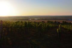 Skalica, vineyads royalty-vrije stock afbeeldingen