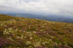 Skalista góra na wiosna sezonie zdjęcia stock