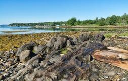 Skalista linia brzegowa przy niskim przypływem przy Searsport, Maine zdjęcie stock