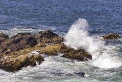 Skalista linia brzegowa w Ogunquit, Maine Obrazy Royalty Free