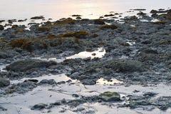 Skalista plaża podczas Niskiego przypływu - Luźna woda zdjęcia stock