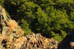 Skalista powierzchnia wzgórza w sosnowym lesie blisko Kemer, Turcja, widok f Zdjęcie Stock