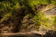 Skaliste falezy i drzewa Zdjęcie Stock