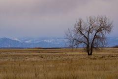 Skalistej góry arsenału obywatela rezerwat dzikiej przyrody Fotografia Stock