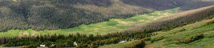 Skalistej góry park narodowy Zielone doliny i iglaści halni lasy obraz royalty free