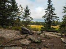 Skalisty bagna Algonquin prowincjonału park Fotografia Royalty Free