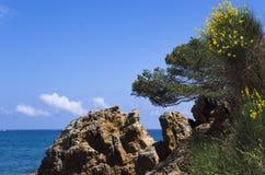 Skalisty brzeg blisko morza zdjęcia royalty free