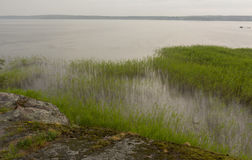 Skalisty brzeg trawa w wodzie Obrazy Royalty Free