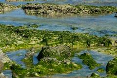 Skalisty denny wybrzeże zakrywający z gałęzatką i fala obraz royalty free