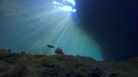 Skalisty dno morze śródziemnomorskie zdjęcie wideo