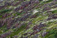 Skalisty kamienia wybrzeże Barents morze, przerastający z mech obraz stock