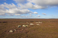 Skalisty moorland krajobraz fotografia royalty free