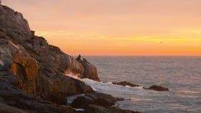 Skalisty oceanu brzeg z fokami, zmierzch, ocean scena zdjęcie wideo