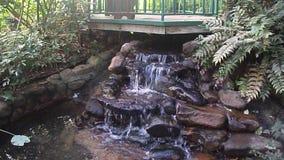 Skalisty strumień otaczający roślinnością zbiory wideo