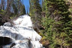 Skalkoho cade nel Montana Fotografia Stock