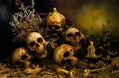 Skallar för den halloween dagen Arkivfoton
