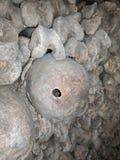 Skallar i katakomberna Arkivfoton