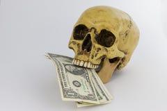 Skalle med US dollarräkningar Arkivbilder