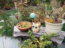 Skalle och blommor och växter och orb i trädgård arkivfoto