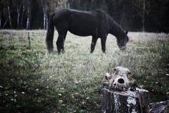 Skalle på en bakgrund av hästen budbäraren av död arkivfoton