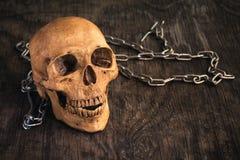 Skalle på en gammal träbakgrund, bluff- mänsklig skalle på träf Arkivfoto
