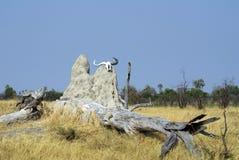 Skalle på en termitkulle royaltyfri foto