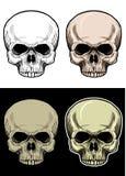 Skallehuvud utan lägre käke, handteckning med färg för 4 variation stock illustrationer