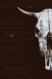 Skallen med horn av en tjur eller en ko fruktansvärd skalle Royaltyfri Bild