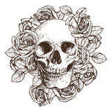 Skallen och rosor skissar in stil illustratören för illustrationen för handen för borstekol gör teckningen tecknade som look past Royaltyfria Foton