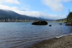 Skallerorm lake Arkivbild