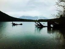 Skallerorm sjö Washington Royaltyfria Foton