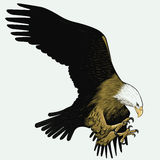 skallig örn Arkivfoto