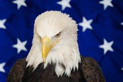 Skallig örn för amerikan royaltyfria foton