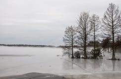 Skallig cypress i den djupfrysta sjön i vinter arkivbilder