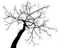 skallig tree Royaltyfri Fotografi