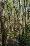 skalliga cypresstrees Arkivfoton