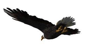 Skalliga Eagle i flugan - vit bakgrund Royaltyfria Bilder