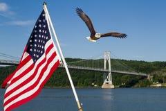 Skalliga Eagle i flykten med amerikanska flaggan Royaltyfri Bild