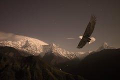 Skalliga Eagle som flyger över en bergdal Royaltyfri Foto