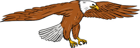 Skalliga Eagle Swooping Drawing Royaltyfri Bild