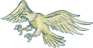 Skalliga Eagle Swooping Etching Royaltyfria Bilder
