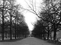 Skalliga träd parkerar in i morgonvinter; svartvit signal Arkivfoto