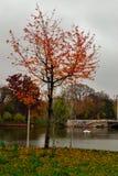 Skalligt rött träd Arkivbild